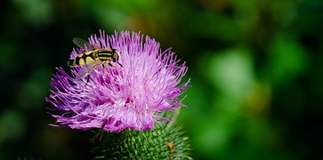 insect-670512__180