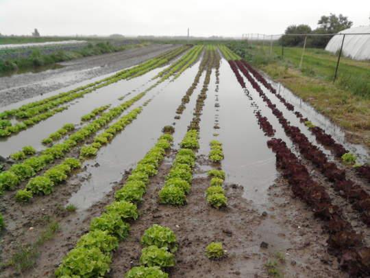 Innondations : gestion de sinistre ?
