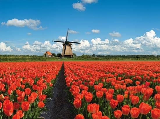 Élections aux Pays-Bas : la foire commence