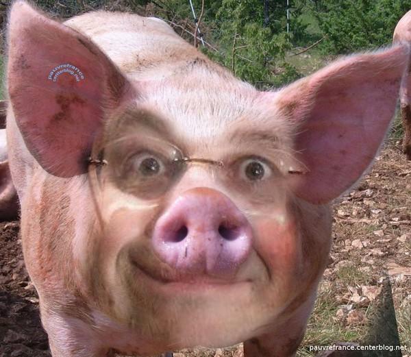 La duplicité de Porcinet : sale gosse !