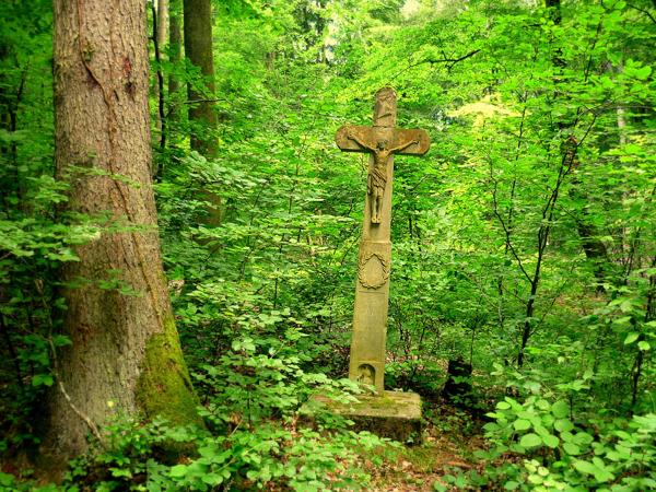 Forêts : coût d'achat à la hausse