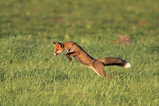 Interdire la chasse in fine