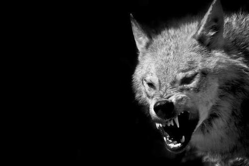 L'heure des loups par le renoncement des agneaux
