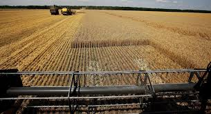 Repli de l'excédent agricole du fait de la chute des exportations de céréales